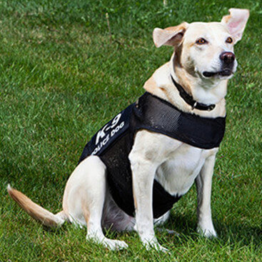 K9 & Police Officer Vests