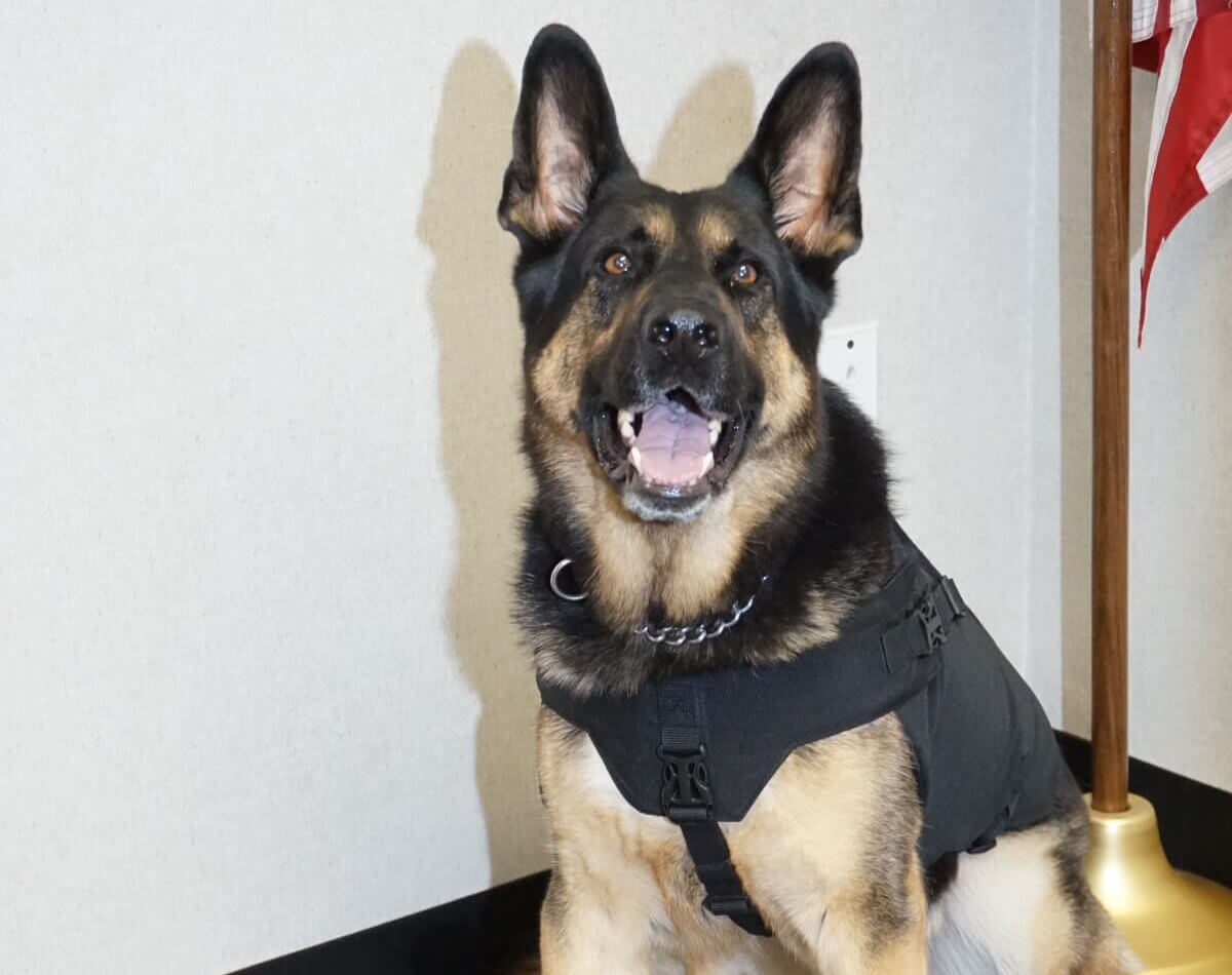 K9 Officer Photo